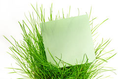 Blank green sticker in green grass Royalty Free Stock Images
