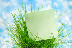 Blank green sticker in green grass Royalty Free Stock Photos