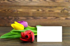 Blank greeting card and colorful tulips. On wooden background Royalty Free Stock Image