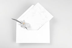 Blank greeting card and envelope decorated with narcissus flower Stock Photo