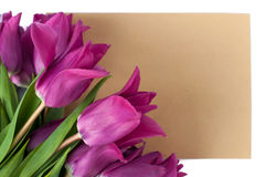 Blank greeting card and envelope with purple tulips over white isolated background. Top view Stock Image