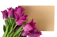 Blank greeting card and envelope with purple tulips over white isolated background Royalty Free Stock Image