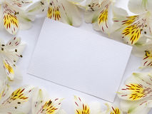 Blank greeting card in the flowers frame Stock Photo