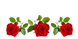 Blank greeting card. By three red roses royalty free stock photography