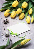 Blank greeting card with tulips and quail eggs on wood Stock Images
