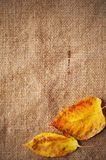 Blank Grungy Canvas Background. Stock Images