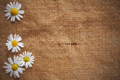 Blank Grungy Canvas Background Stock Photography