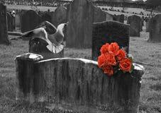 Blank headstone in graveyard Royalty Free Stock Image
