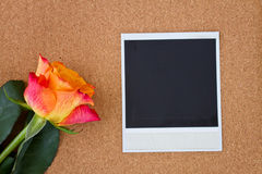 Instant photo with one rose Stock Images