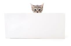 blank kattunge Arkivbild