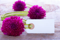 Blank Label. With Copy Space and Purple Flowers and Green Ribbon as Background Royalty Free Stock Photography