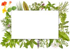 Blank label framed by herbs 1. Blank label framed with many different herbs, Design 1 stock images