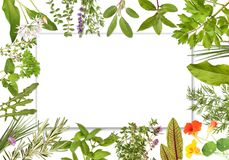 Blank label framed by herbs 2. Blank label framed with many different herbs, Design 2 royalty free stock photos