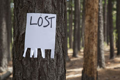 A blank lost sign. Nailed to a tree in a forest Royalty Free Stock Photo