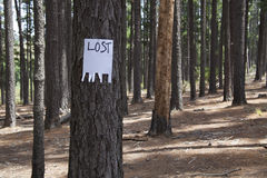 A blank lost sign. Nailed to a tree in a forest Stock Photography