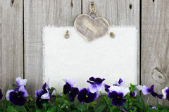 Blank muslin sign with purple flowers (pansies) Stock Images