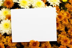 Blank Note Royalty Free Stock Photo