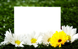 Blank note card with daisies royalty free stock image