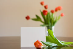 Blank Notecard with Tulips. This is a photo depicting a blank notecard with a solitary coral tulip resting in front of it. The background shows more tulips in a Stock Image