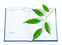 Blank notepad. Notepad opened on blank page, with space for text. With green leaves lying over it Royalty Free Stock Photo