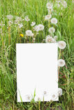 Blank paper card in grass royalty free stock images