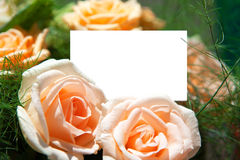 Blank of paper and flowers Royalty Free Stock Image