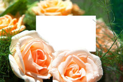 Blank of paper and flowers Stock Image