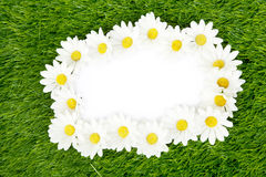 Blank paper framed with daisy petals Royalty Free Stock Photo