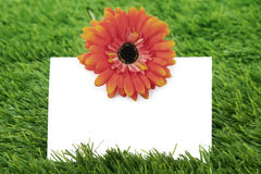 Blank paper with garbera on grass Royalty Free Stock Photos