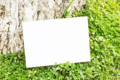 Blank paper on green grass Royalty Free Stock Photos