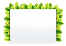 Blank Paper on Green leaves Royalty Free Stock Image