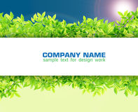 Blank Paper on Green leaves. Synthesis background template Royalty Free Stock Photos