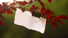 Blank paper for message. Torn white empty piece of paper hanged on tree branch ideal for easy typing messages Royalty Free Stock Images