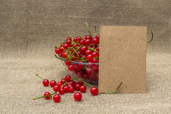 Blank paper and red currant in a bowl Royalty Free Stock Photography