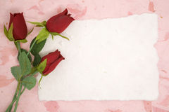 Blank paper with red rose Stock Image