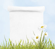 Blank paper scroll on spring background. With daisies and grass stock photo