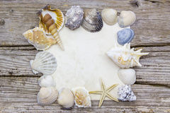 Blank paper with seashells Stock Image