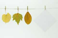 Blank paper sheet and autumn leaves Stock Photography