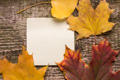 Blank paper sticker with autumn leaves on old wood background Royalty Free Stock Image