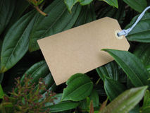 Blank paper tag in leaves. Brown paper tag among green leaves Royalty Free Stock Photos