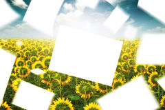 Blank Papers Floating in the Wind in Sunlower Field Stock Photos