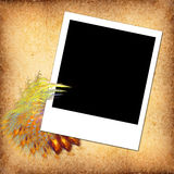 Blank Photo Stock Images