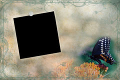 Blank Photo Background. Photo based illustration of a Swallowtail butterfly background with blank vintage photo Royalty Free Stock Images