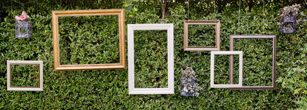 Blank photo frames against green small tree wall. Stock Photography