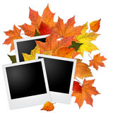 Blank photo frames with autumn leaves. On white Royalty Free Stock Photo