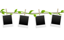 Blank photo frames with green plant. This image was made by Adobe Illustration Stock Image