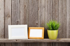 Blank photo frames and plant Royalty Free Stock Images