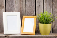 Blank photo frames and plant Stock Image