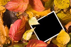 Blank photo in the leaves Royalty Free Stock Photography