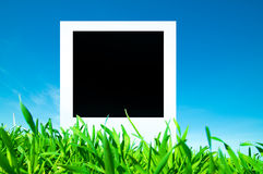 Blank photo on nature background Royalty Free Stock Images